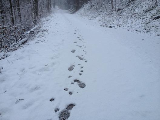 snow-110062_960_720