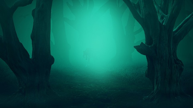 forest-4365198_960_720