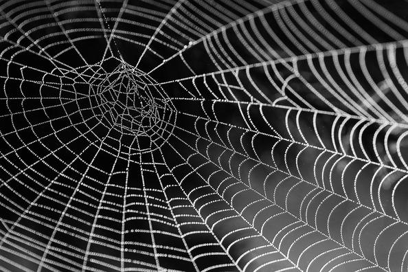 cobweb-921039_1920