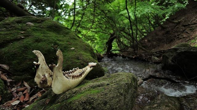 bone-1696609_960_720
