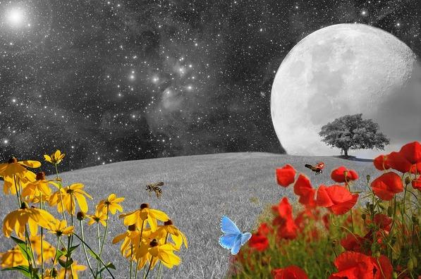 meadow-2401873_960_720